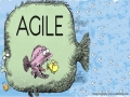 PMI-ACP-Agile - An Iterative Project Management Approach